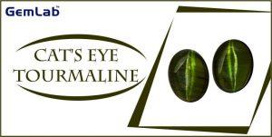 Cats eye tourmaline